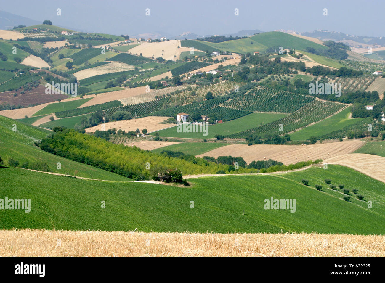 typical undulating patchwork countryside of le Marche ,The Marches,Italy - Stock Image