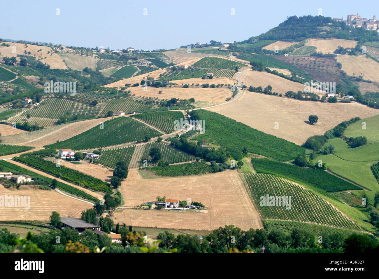 typical undulating patchwork countryside of le Marche ,The Marches,Italy Stock Photo