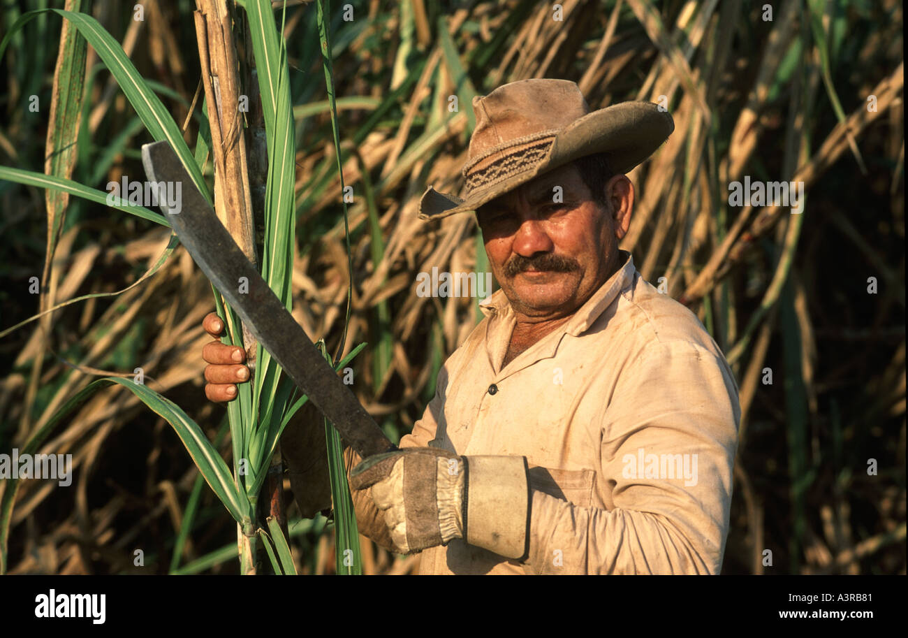 Cuban Man Cutting Sugar Cane On Collectivo Farm Or Collective Soviet Style In A Rural Area Outside Of Havana Cuba