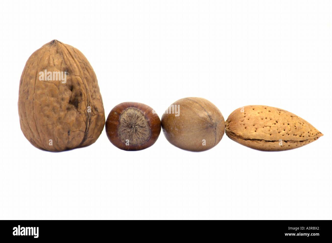 An assortment of nuts hazelnut almond walnut pecans line-up - Stock Image
