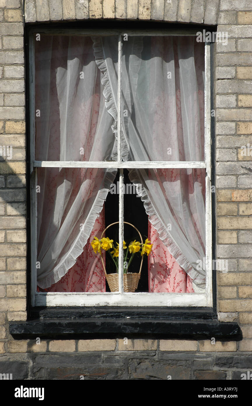 Old traditional wooden wood framed sash window and yellow daffodils Aberystwyth Wales UK - Stock Image