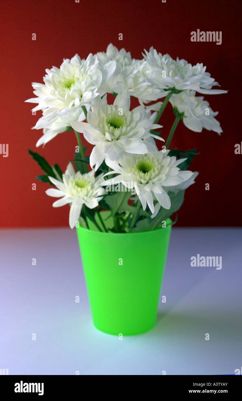 white flowers in a plastic cup stock photo 10859762 alamy