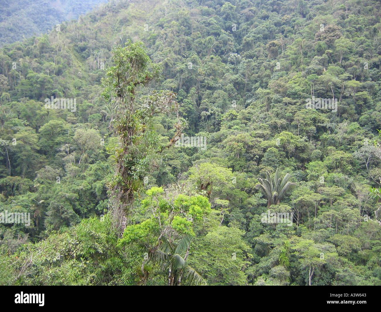 rain forest in Ecuador - Stock Image