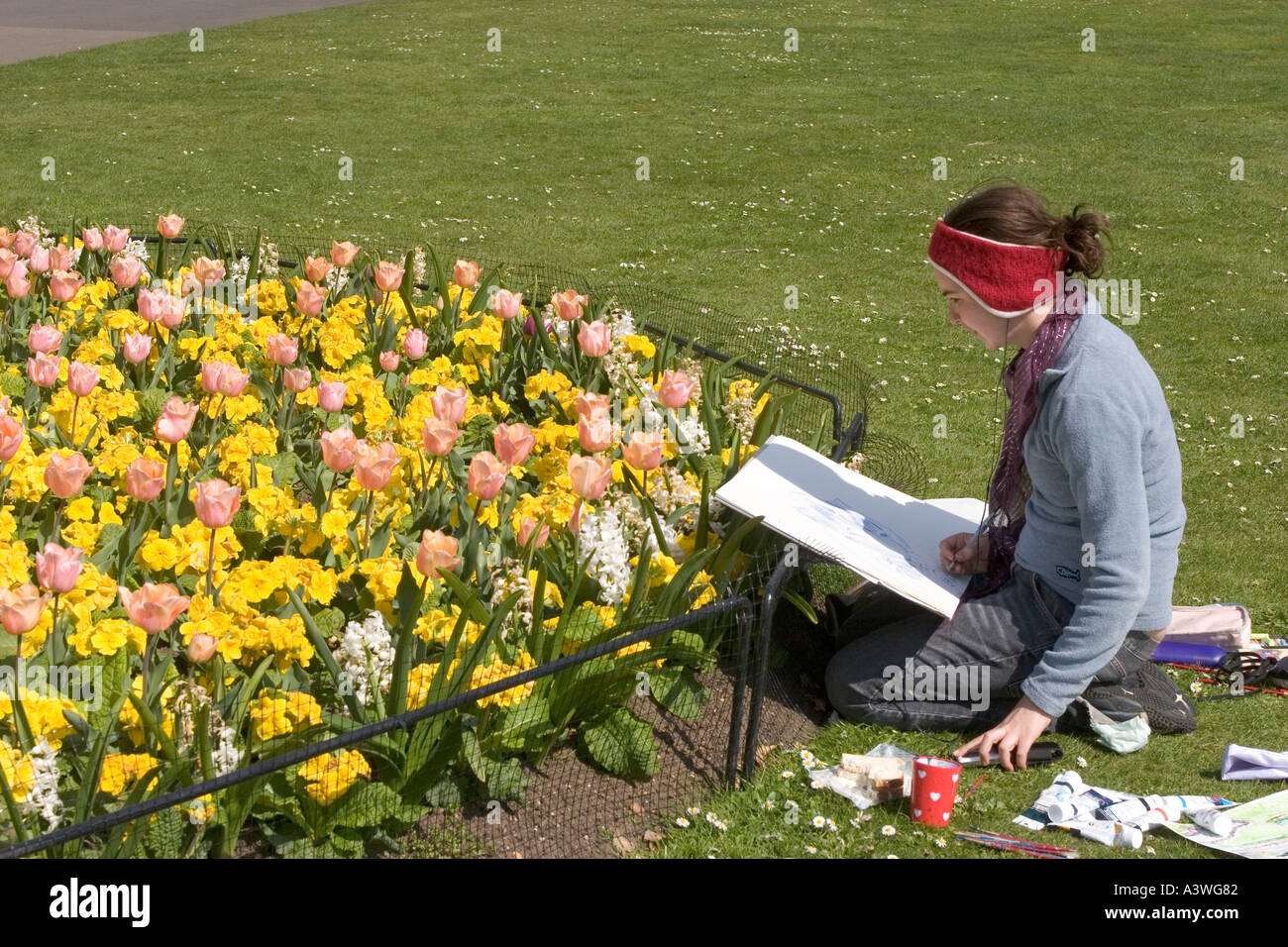 Artist drawing Tulip Apricot Beauty and Primula Crescendo Lemon Yellow - Stock Image