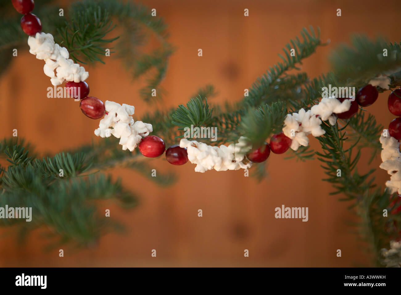 Popcorn And Cranberry Garland Hanging On Christmas Tree Stock Photo