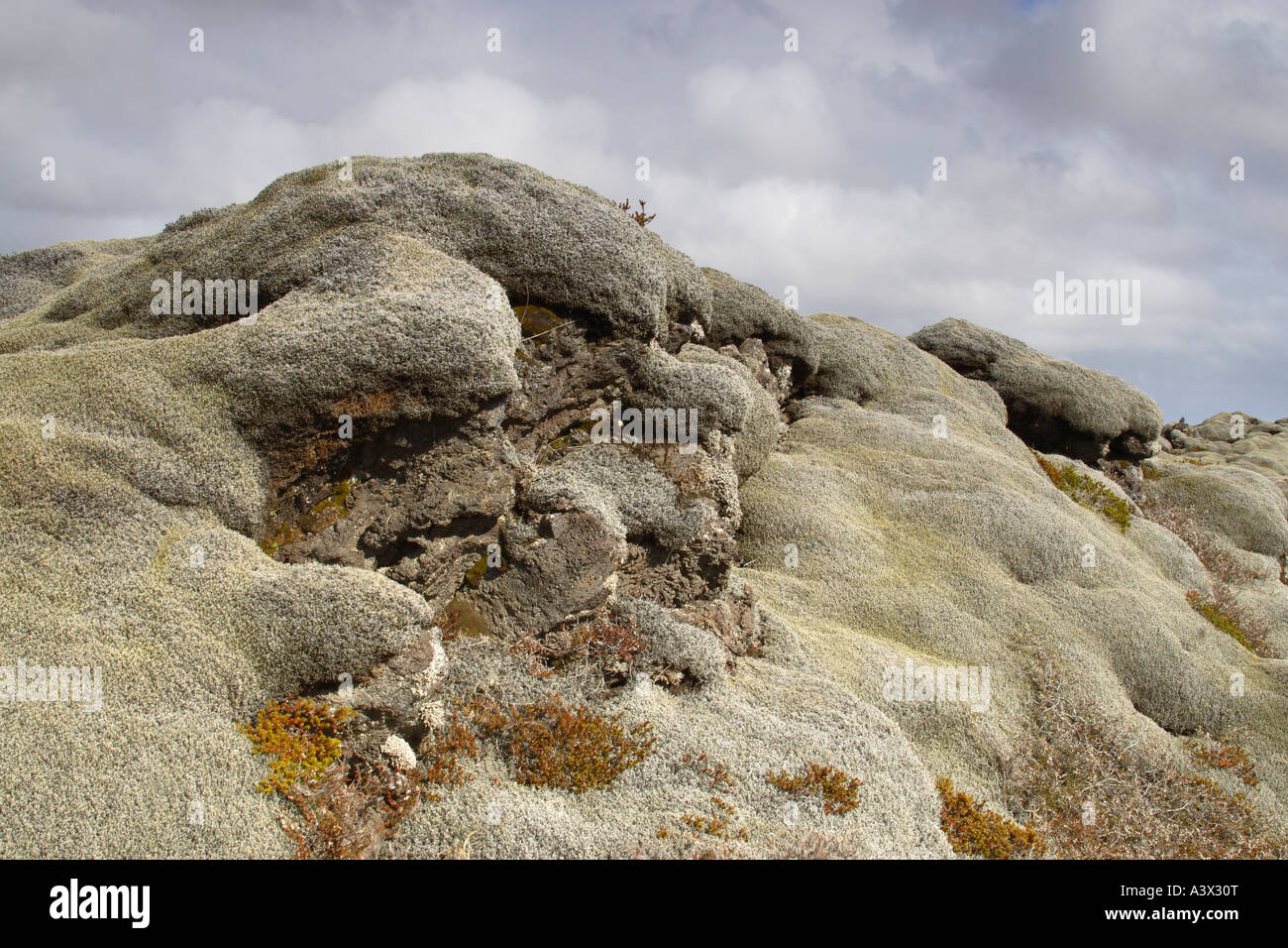 Pillow lava formations covered in mosses and other plants Land brot south east Iceland Stock Photo