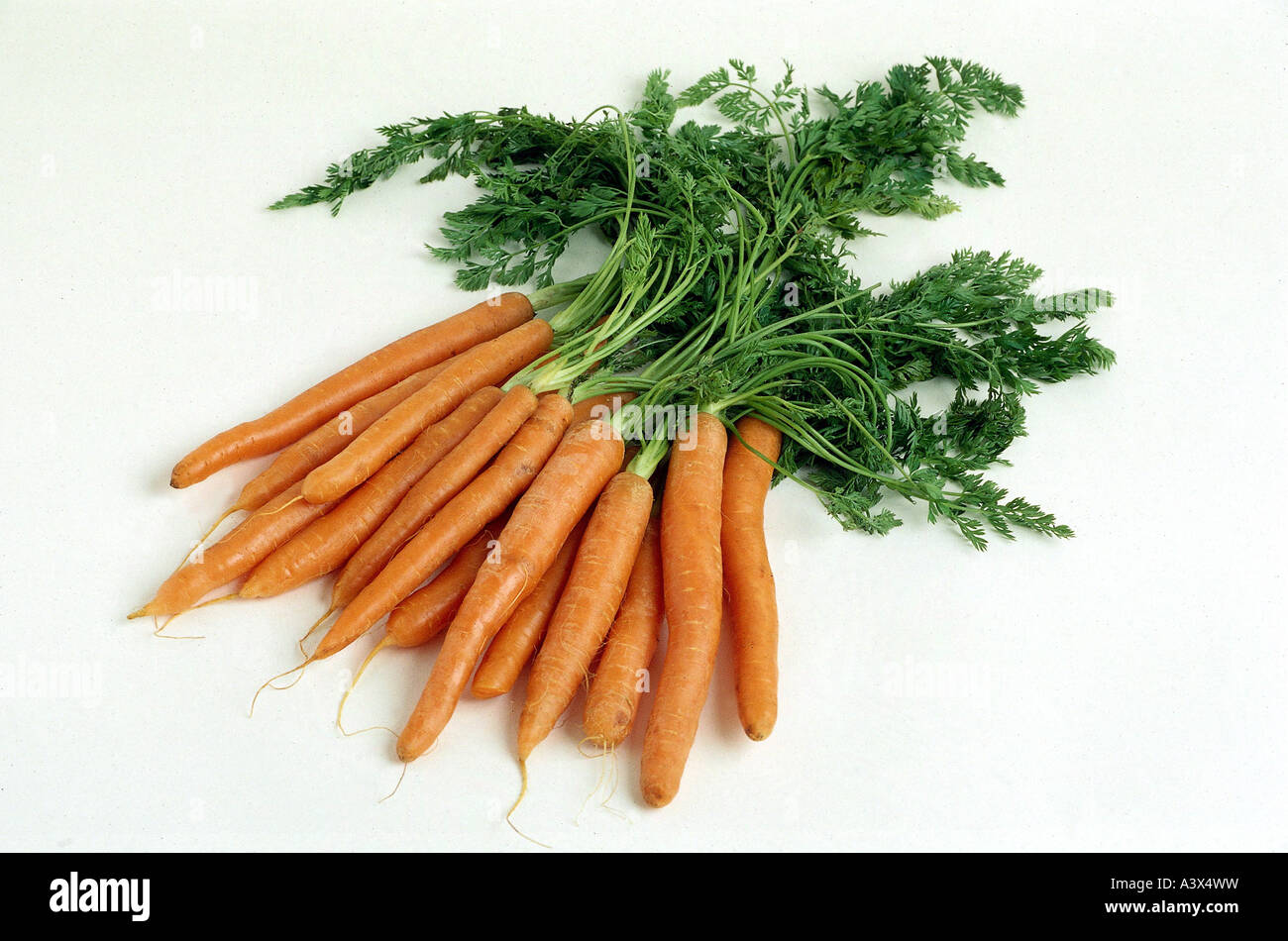 effectiveness of carrot juice daucus carota This study investigated the effects of five fractions from carrot juice extract (cje) on human lymphoid leukaemia cell lines, together with five purified bioactive compounds found in daucus carota.