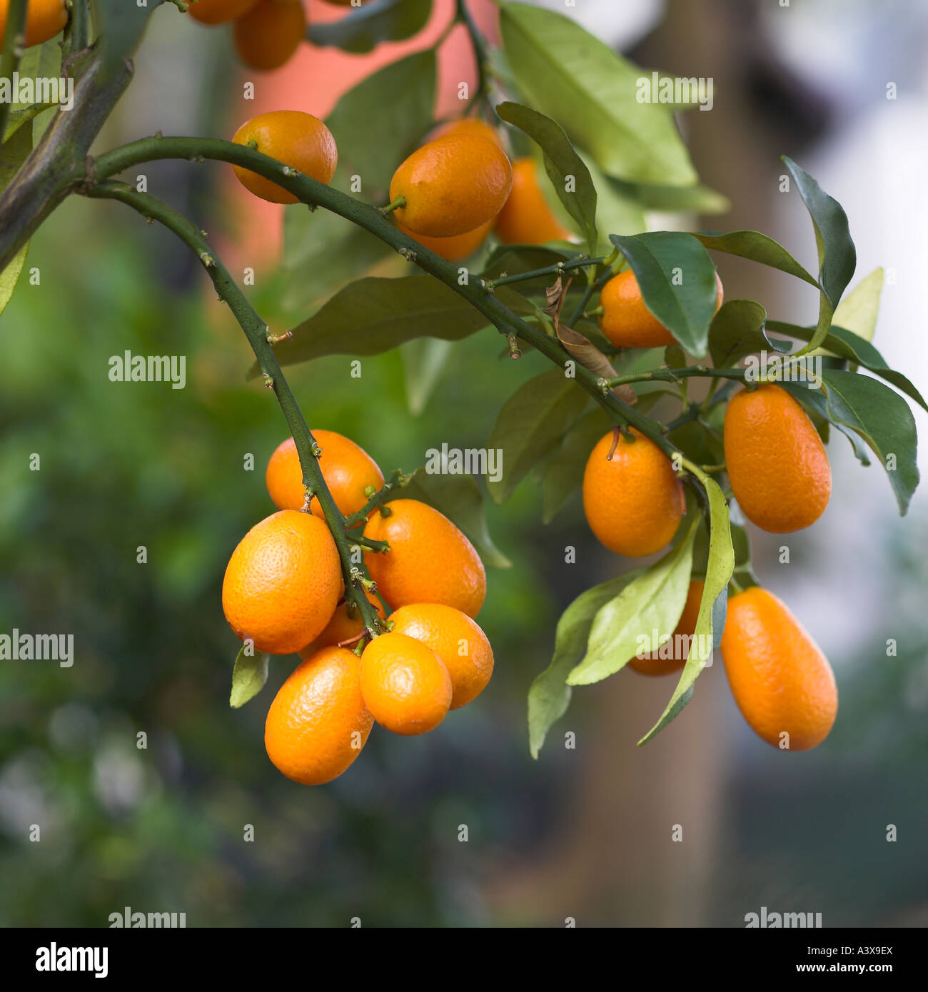 orange grove patio stock photos orange grove patio stock images