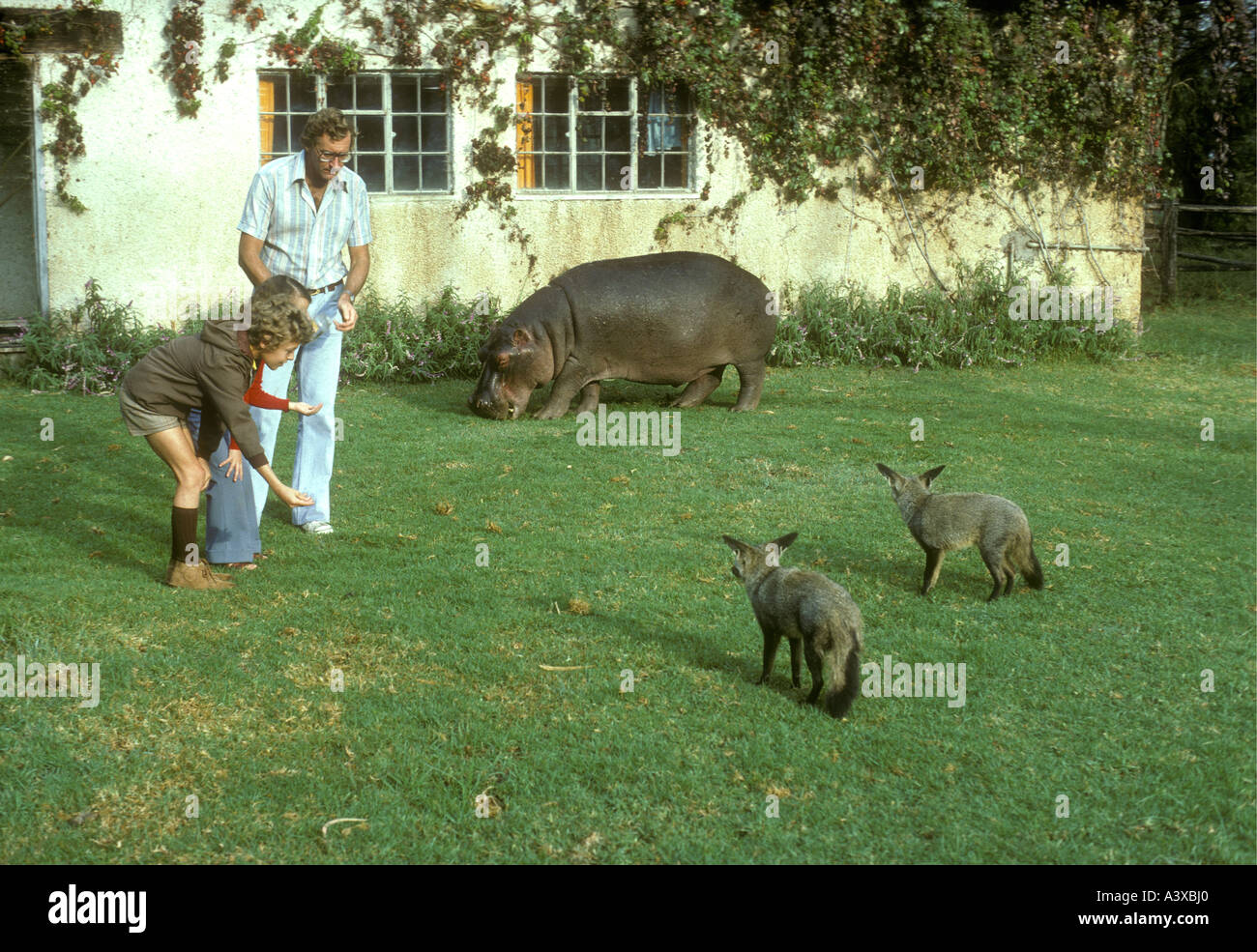 Alan Root showing two children Sally the Hippo and two Bat Eared Foxes in the garden of his Naivasha home Kenya East Africa - Stock Image