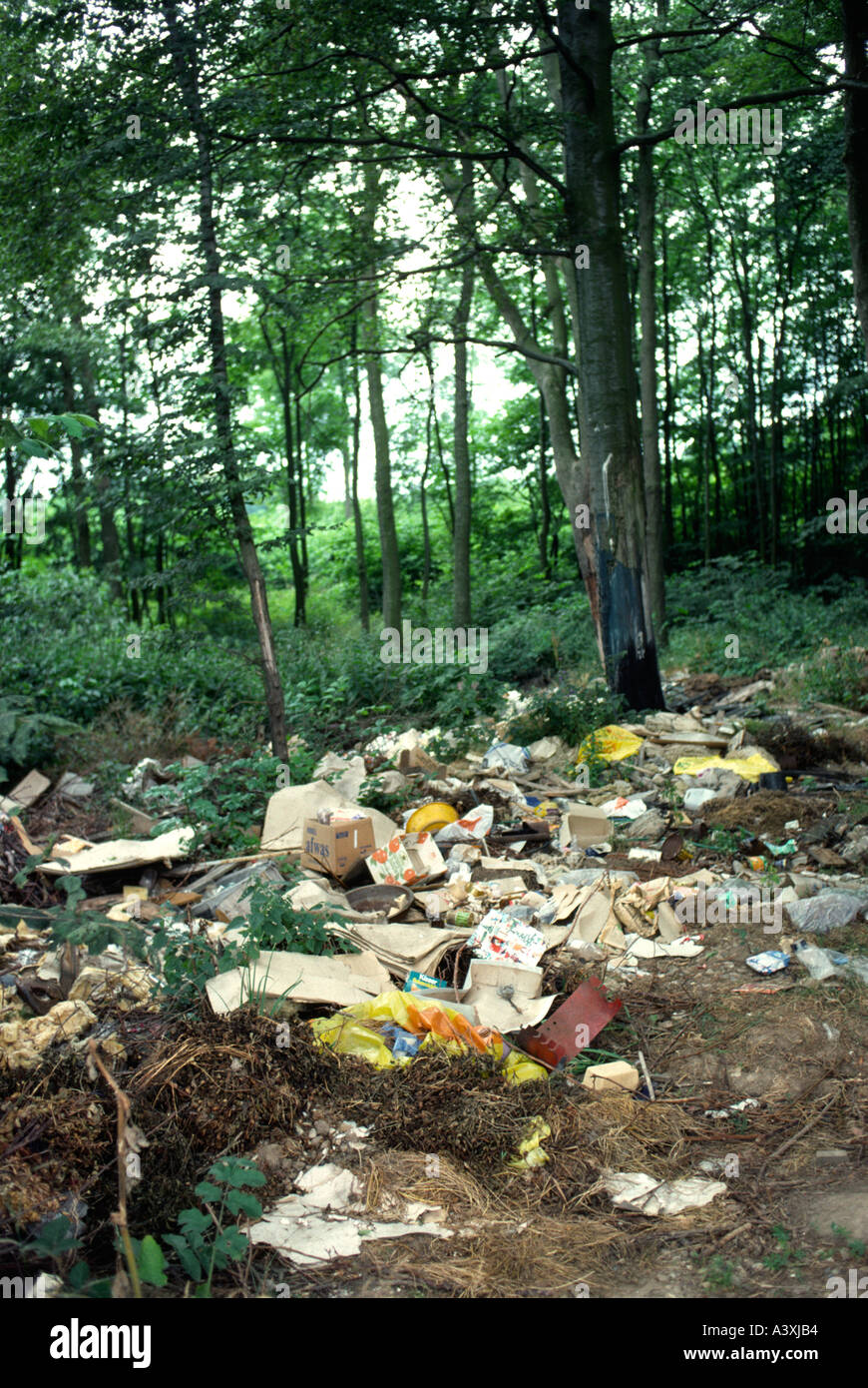 Litter thrown in a danish forrest, - Stock Image