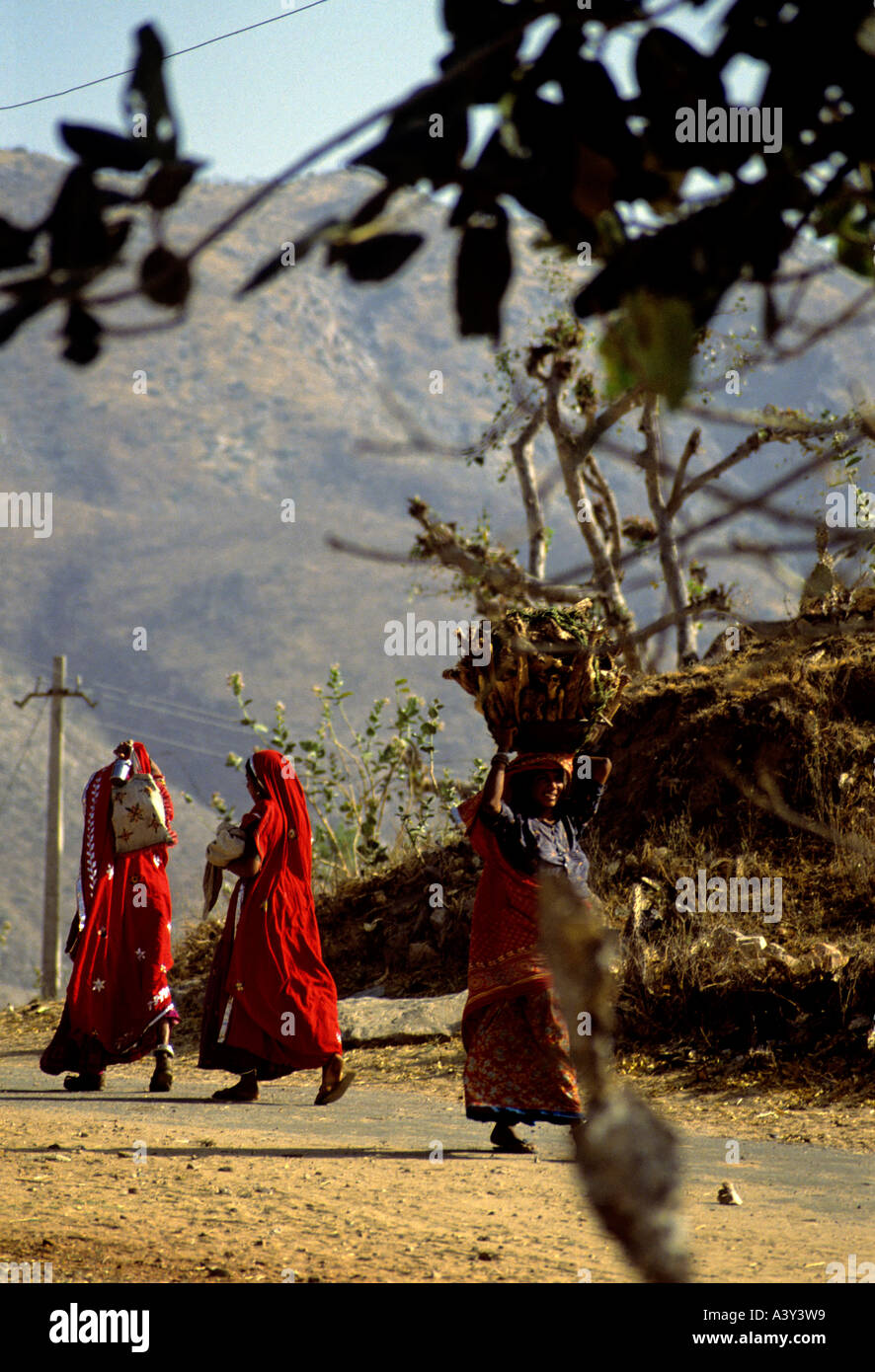women carrying burden on head near city of pushkar and desert of thar state of rajasthan india - Stock Image