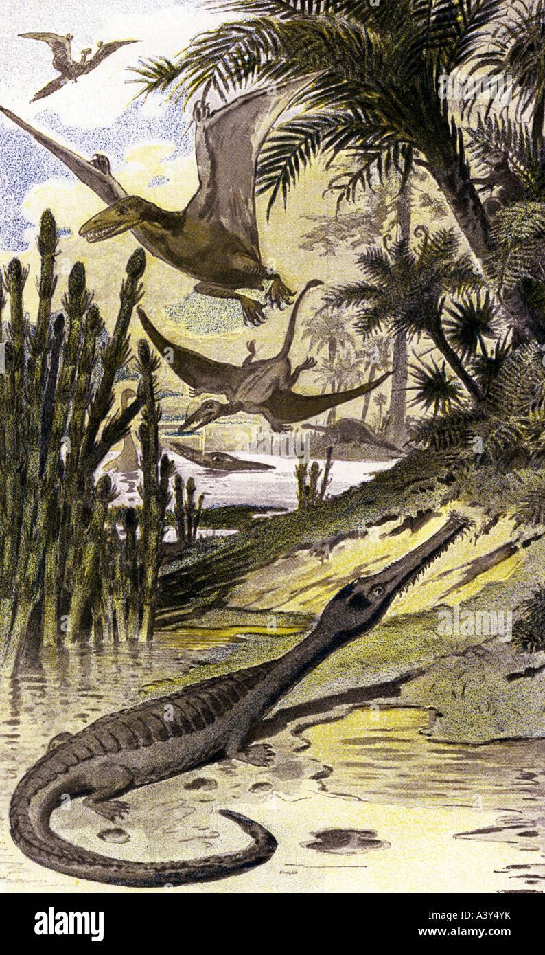 aeon, animals, saurians, Teleosaurus, Rhamphorhynchus, Pterodactylus, Archaeopterix, drawing, 19th century, landscape, - Stock Image