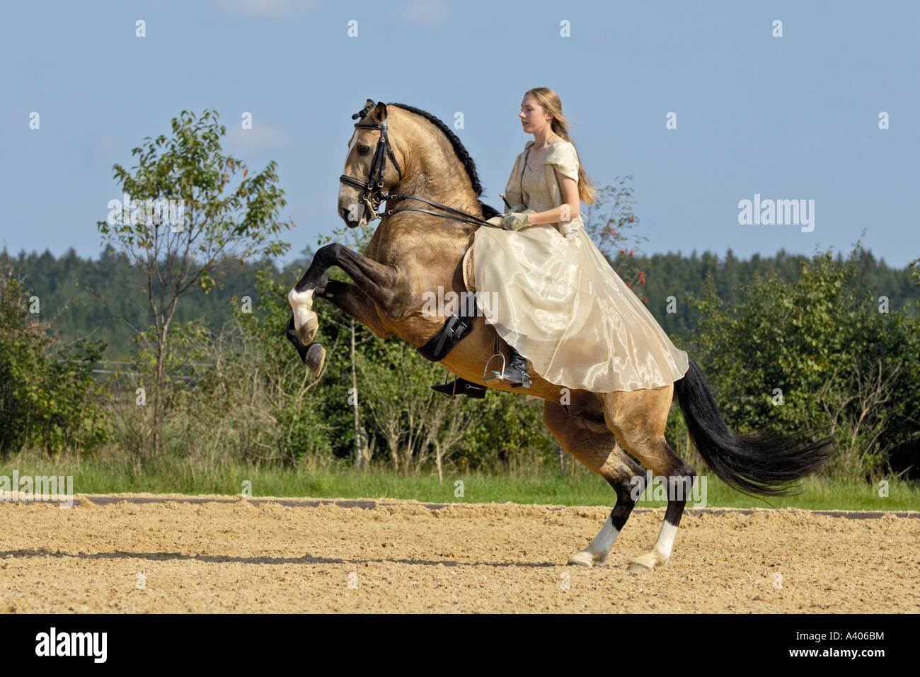 Girl wearing historic clothing on a rearing Lusitano horse stallion circus exercise - Stock Image