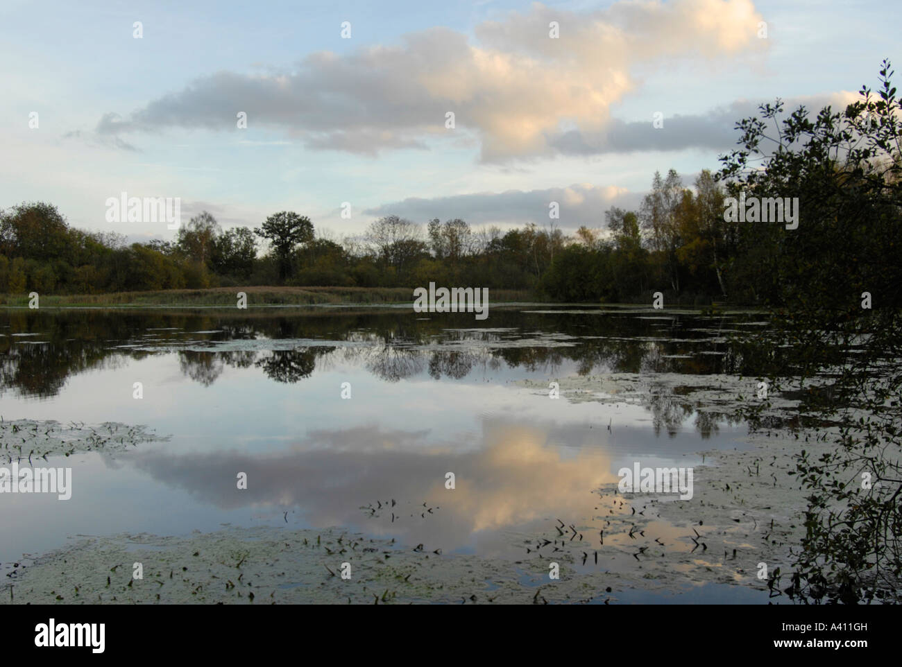 Dusk sky over lake Thompson Norfolk UK - Stock Image