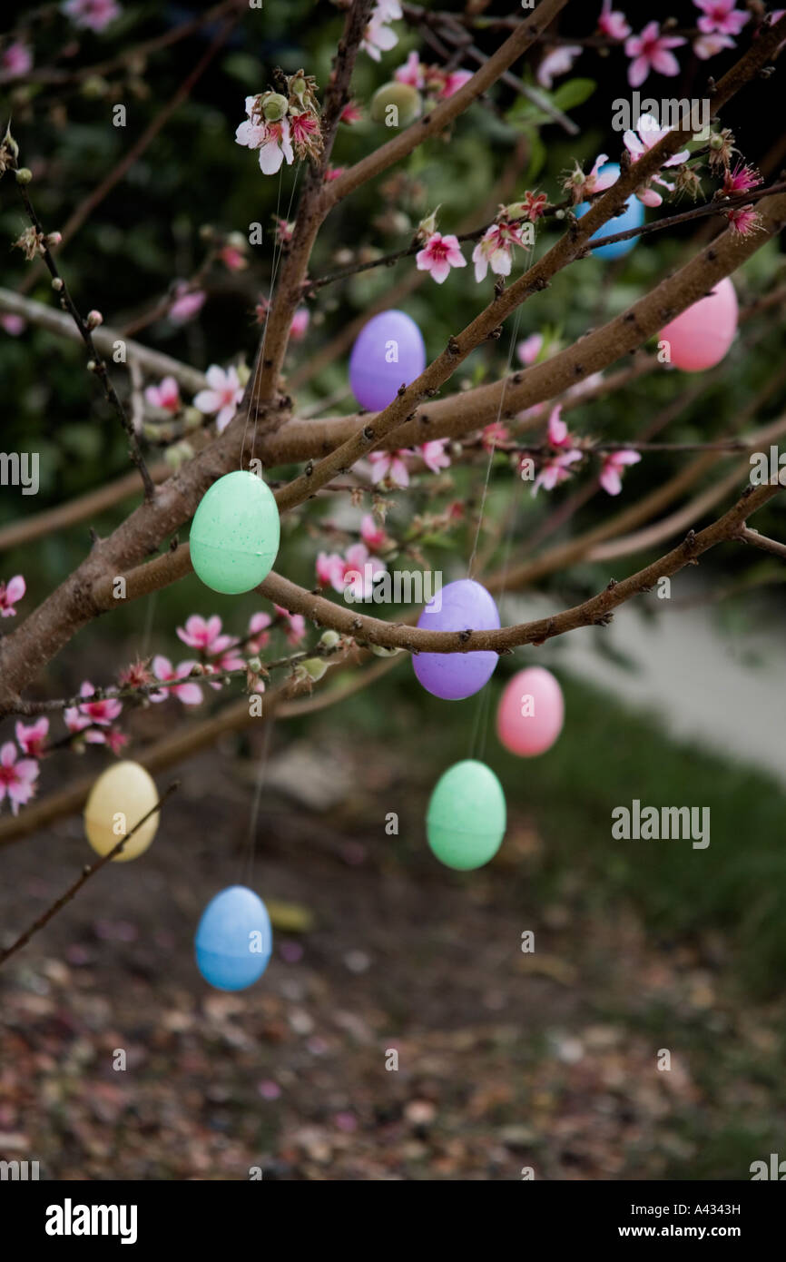 Easter Eggs Hanging On Blossoming Peach Tree Easter Tree Stock Photo Alamy