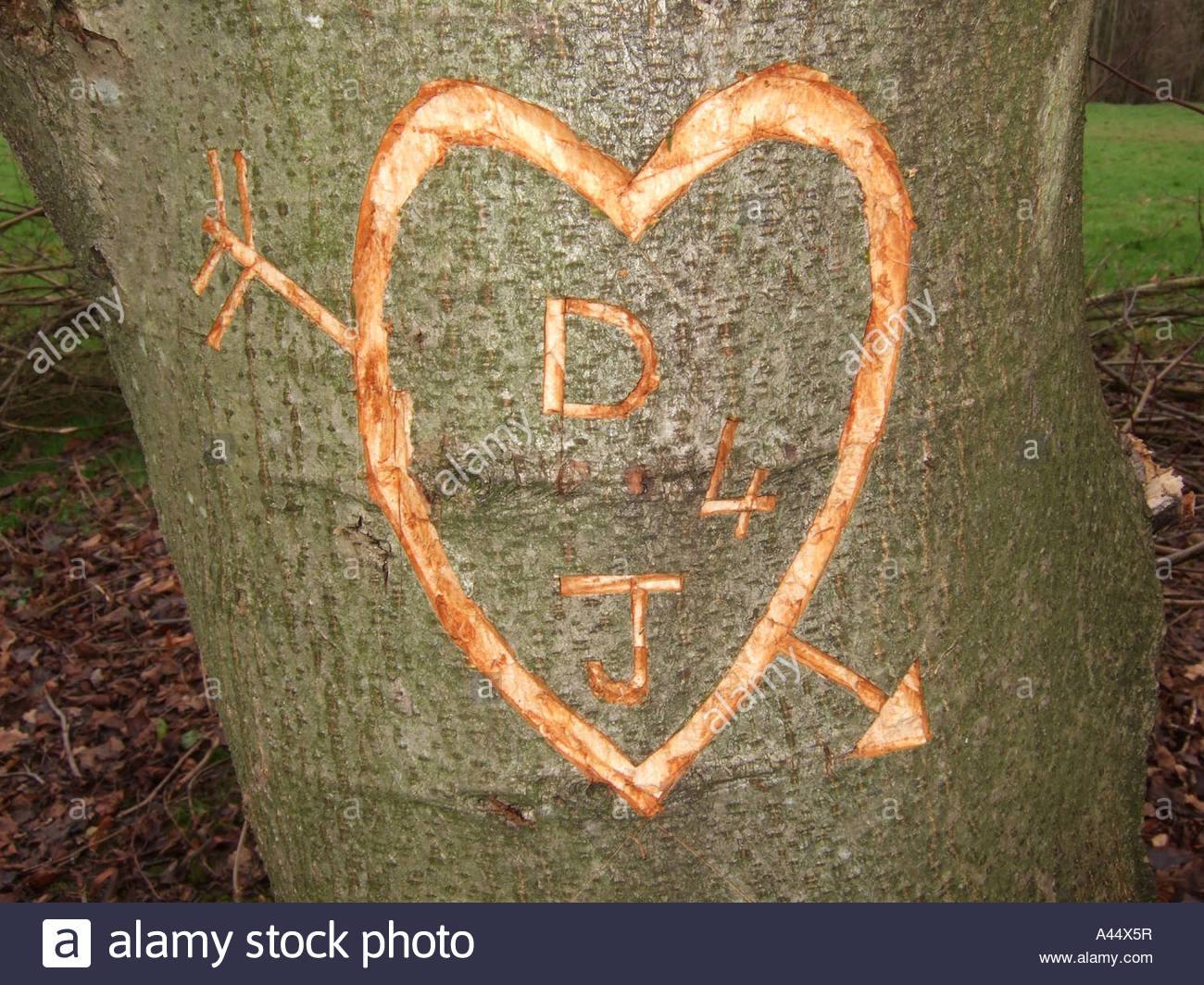 Initials Carved Tree Carving Stock Photos Initials Carved Tree