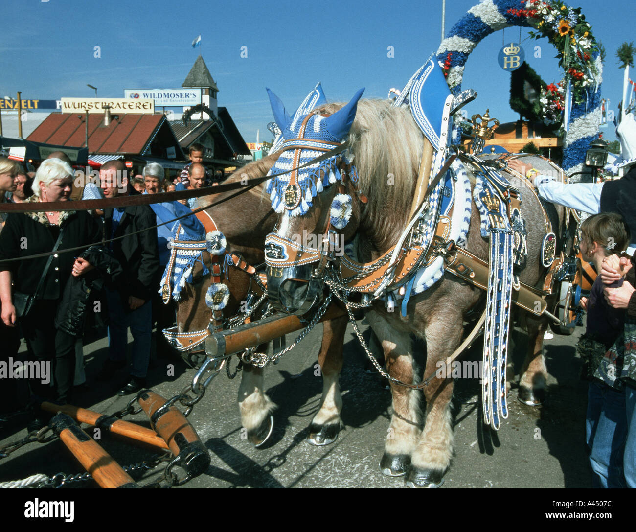 rich decorated horses of the brewery at the oktoberfest Munich bar cultural culture dine dining dinner drink drinks dri - Stock Image