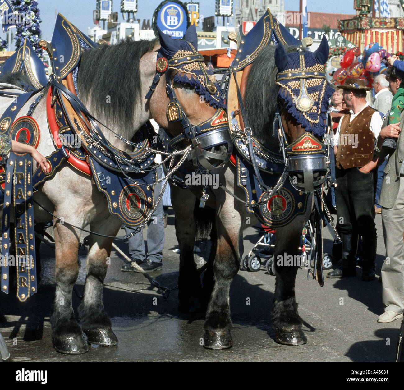 decorated horses of the brewery oktoberfest munich bar cultural culture dine dining dinner drink drinks drinking eat e - Stock Image