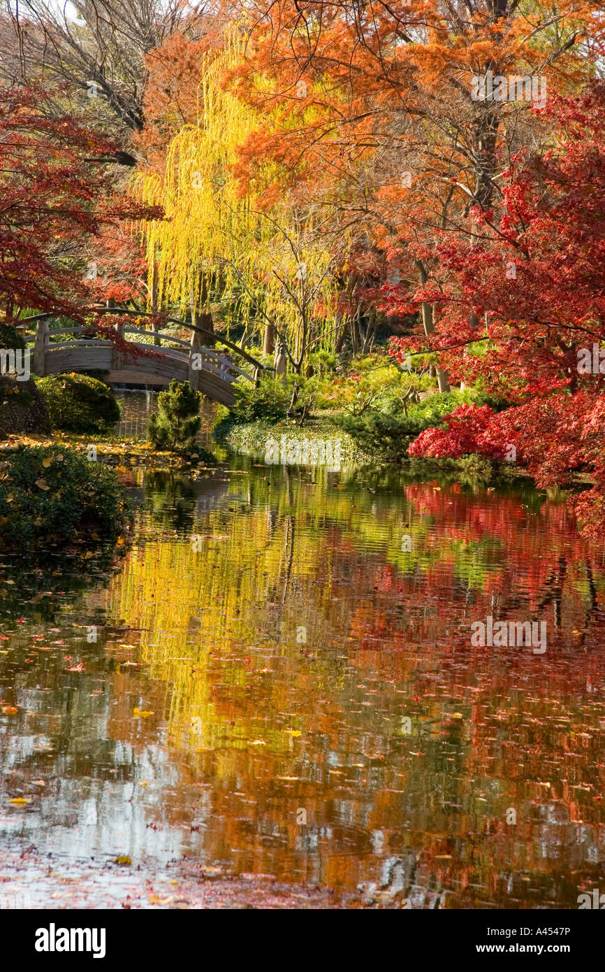 Colourful Autumn Peaceful Scene, Japanese Botanical Gardens, Fort ...
