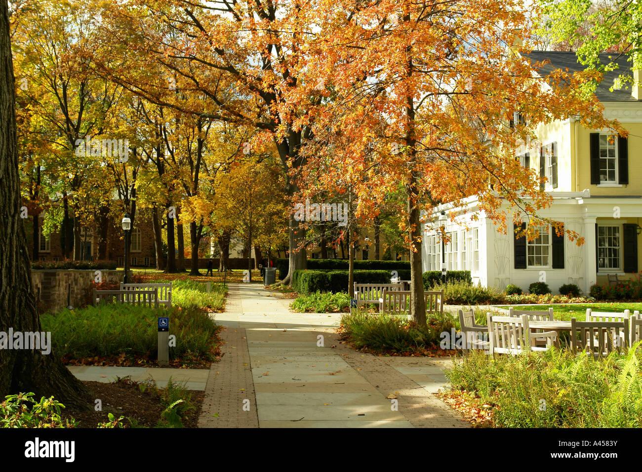 princeton university campus autumn stock photos