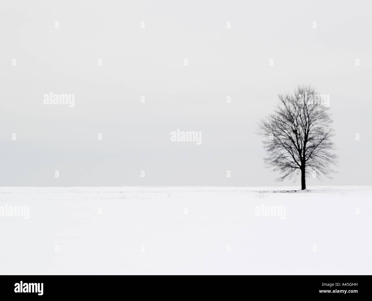 Single tree on snow covered field - Stock Image