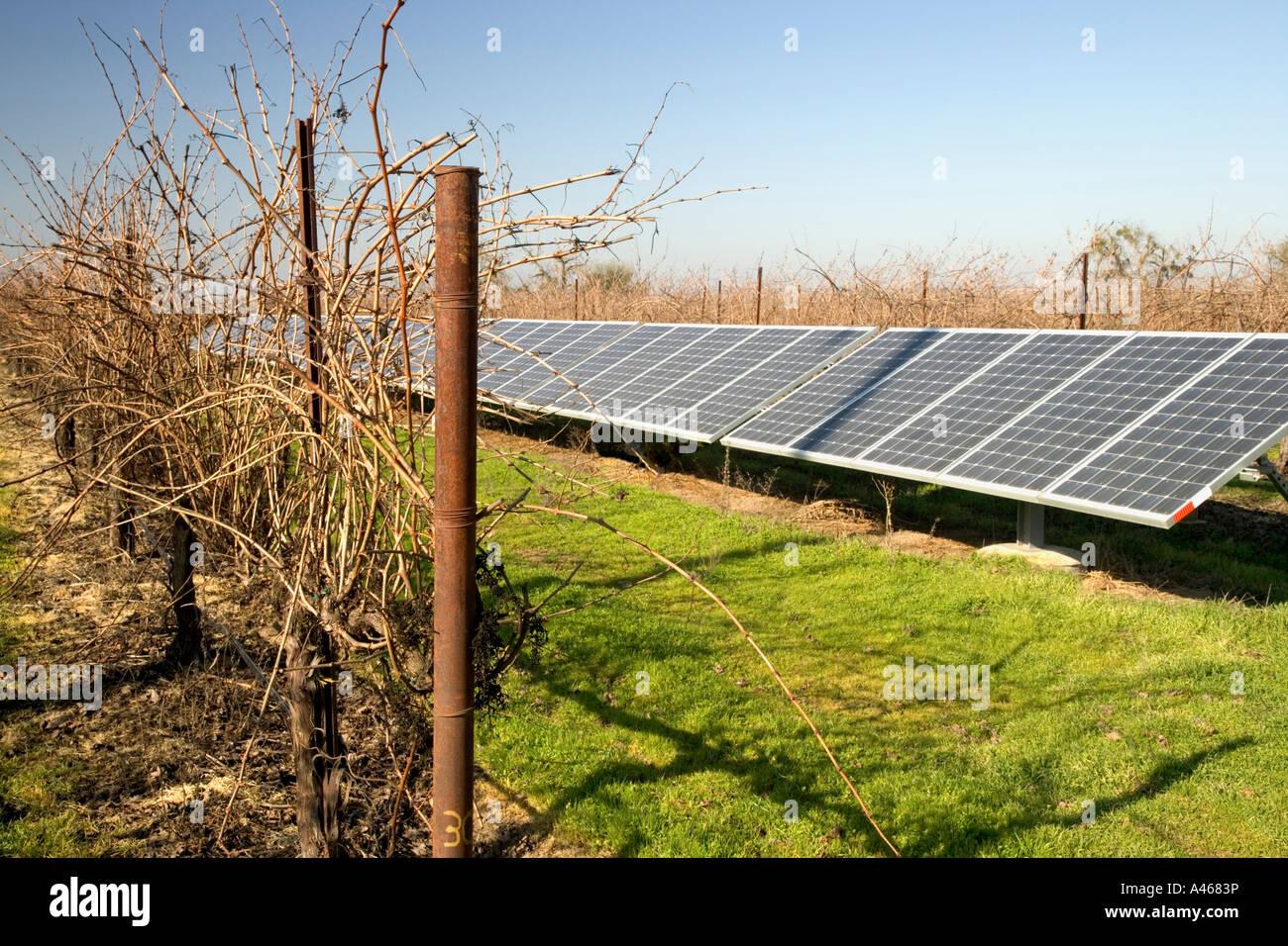 Solar panels operating in dormant vineyard. - Stock Image