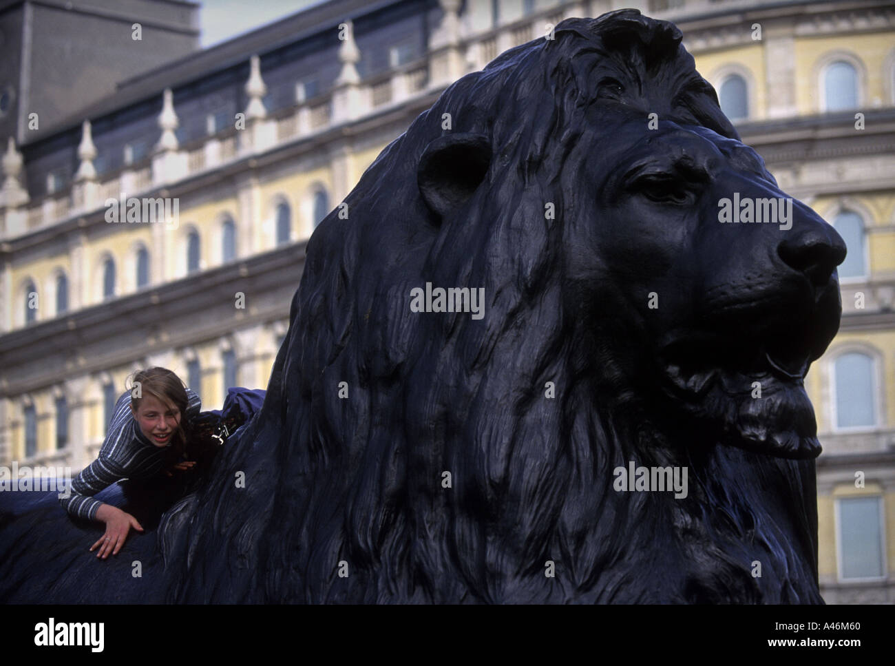 A child climbs onto a lion sculpture at the base of Nelsons Column in Trafalgar Square in London - Stock Image