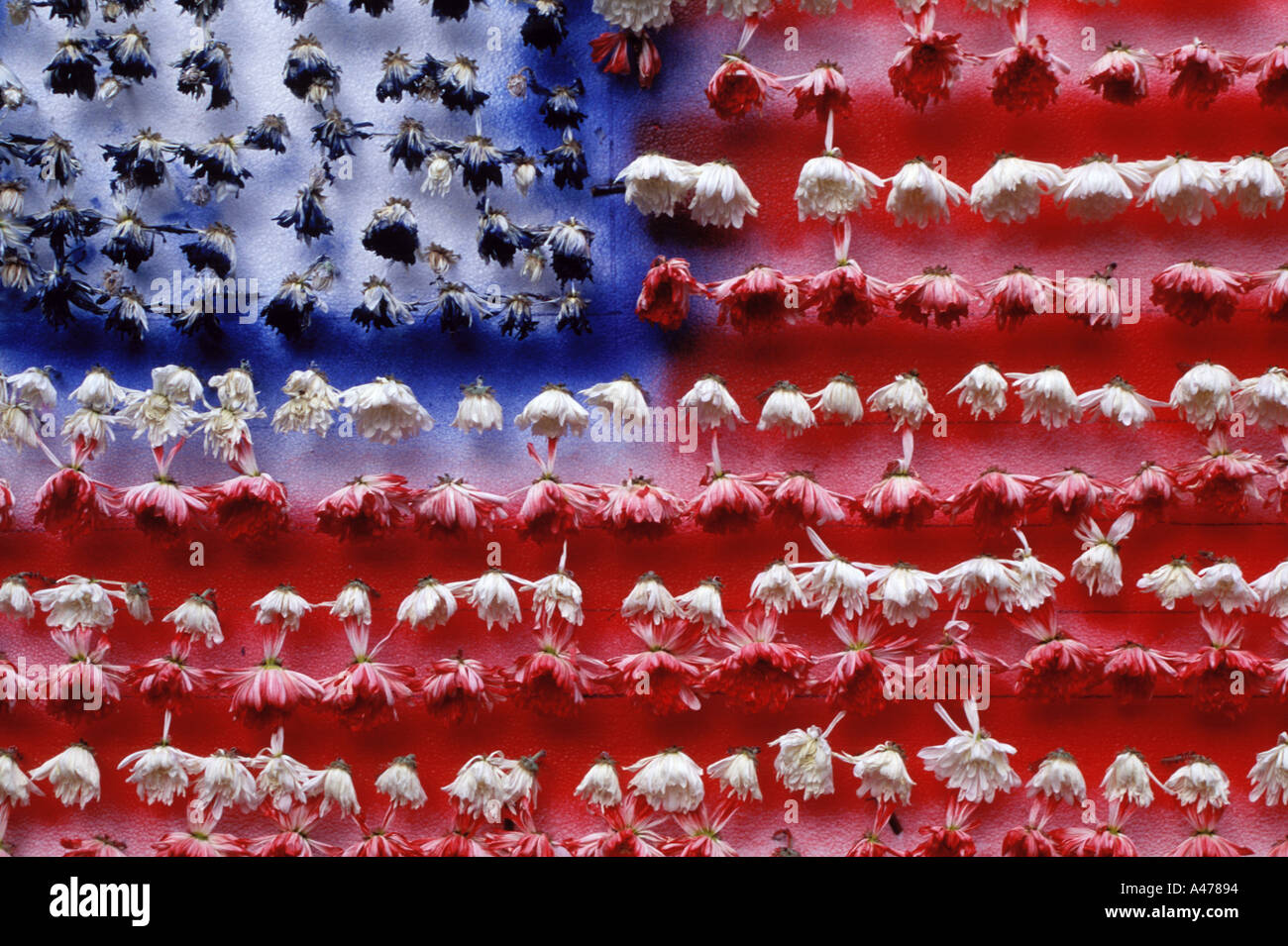 American flag made from carnations that have then wilted September 11 candlelight vigil at Union Square Park New York City - Stock Image
