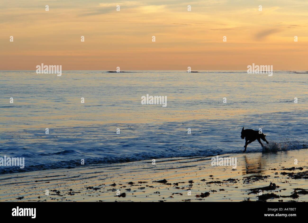 Dog at China Beach Aptos California United States - Stock Image