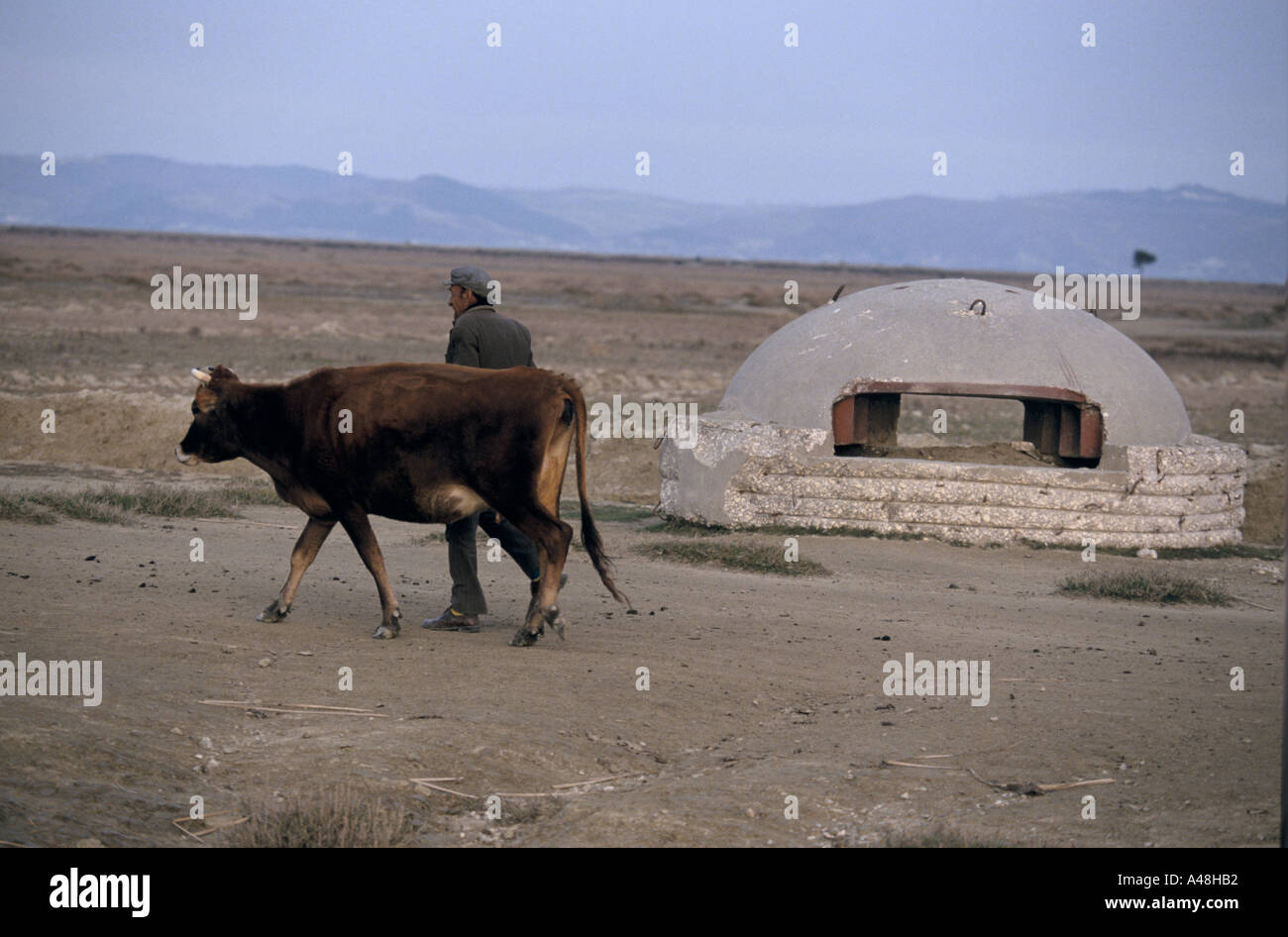 An albania man leading a cow past a concrete bunker built during the Enver Hoxa years - Stock Image
