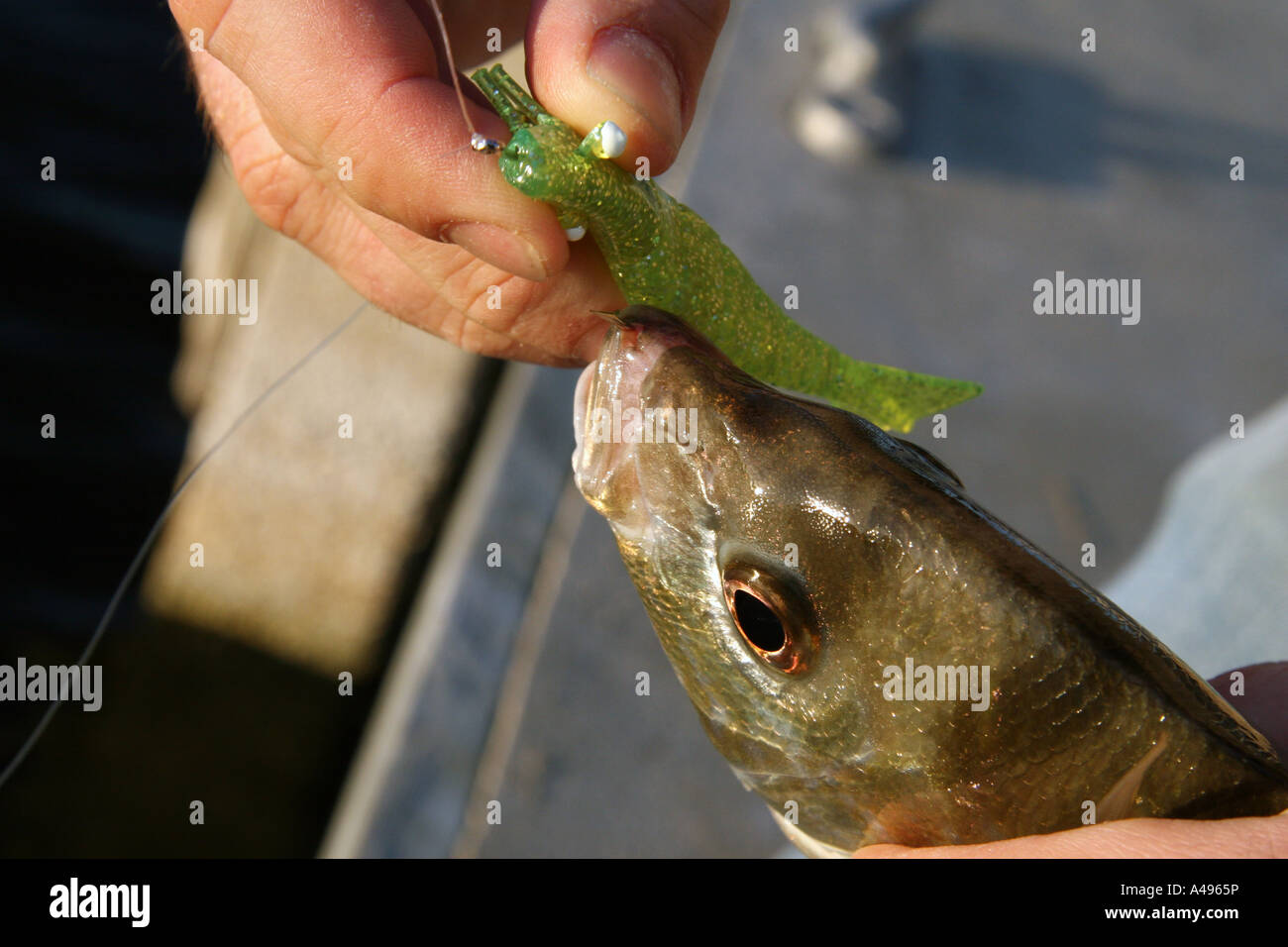 Removing a fish hook Stock Photo