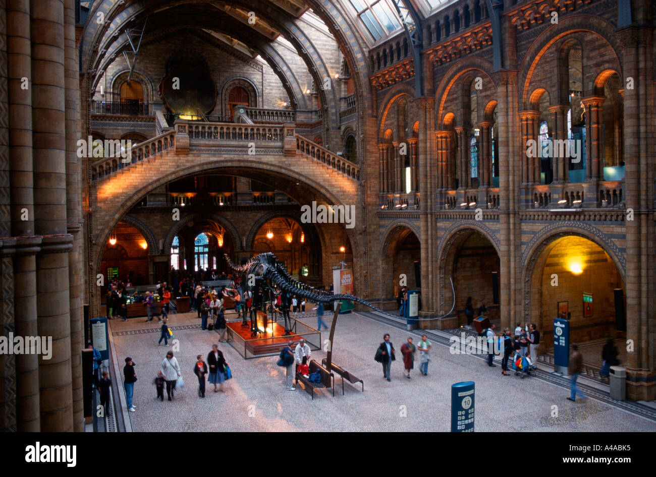 Natural History Museum / London - Stock Image
