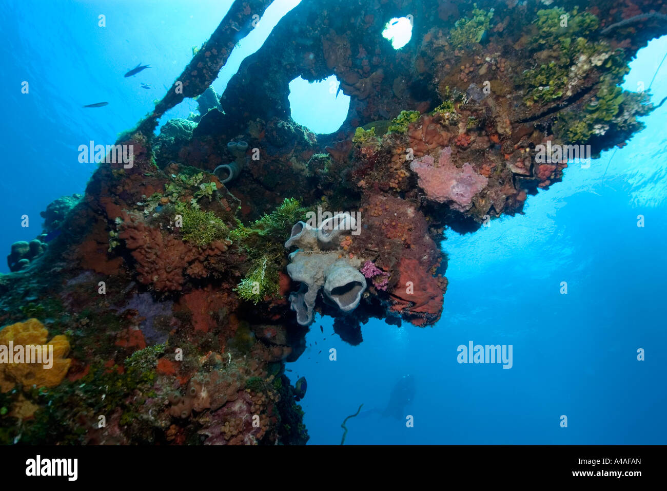 Sponges algae and corals growing over the external structure of the Fujikawa Maru Truk lagoon - Stock Image