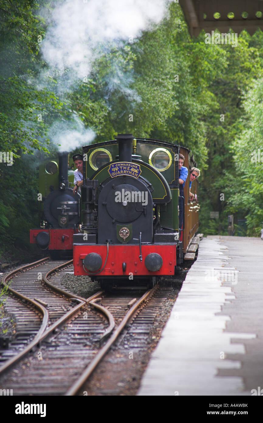 Talyllyn train approaching Dolgoch Falls Station - Stock Image