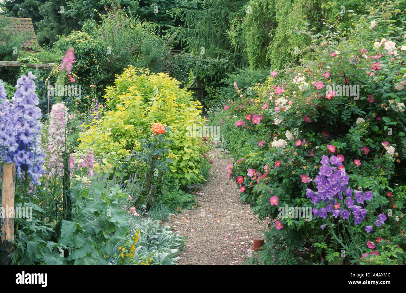Delphinium And Roses In Cottage Garden With Gravel Path Stock