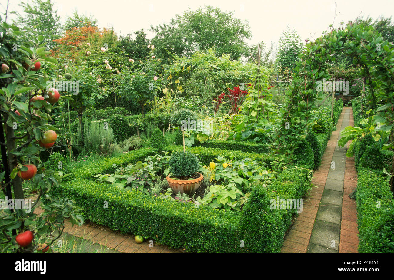 Vegetable Garden With Clipped Box Hedges And Apples Stock Photo