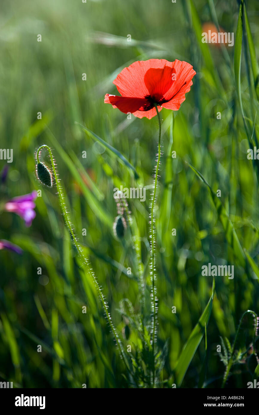Heroin Meadow Stock Photos Heroin Meadow Stock Images Alamy