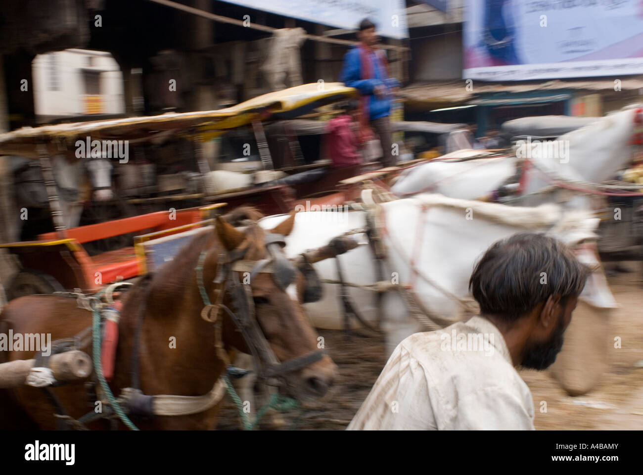 Rickshaw driver trying to get through horses and people in Varanasi - Stock Image