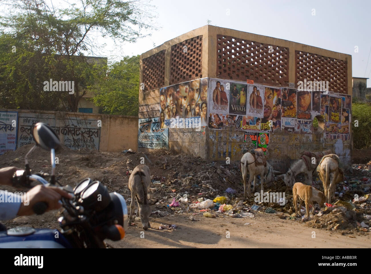 Stock image of donkeys eating garbage on the street in Agra India - Stock Image