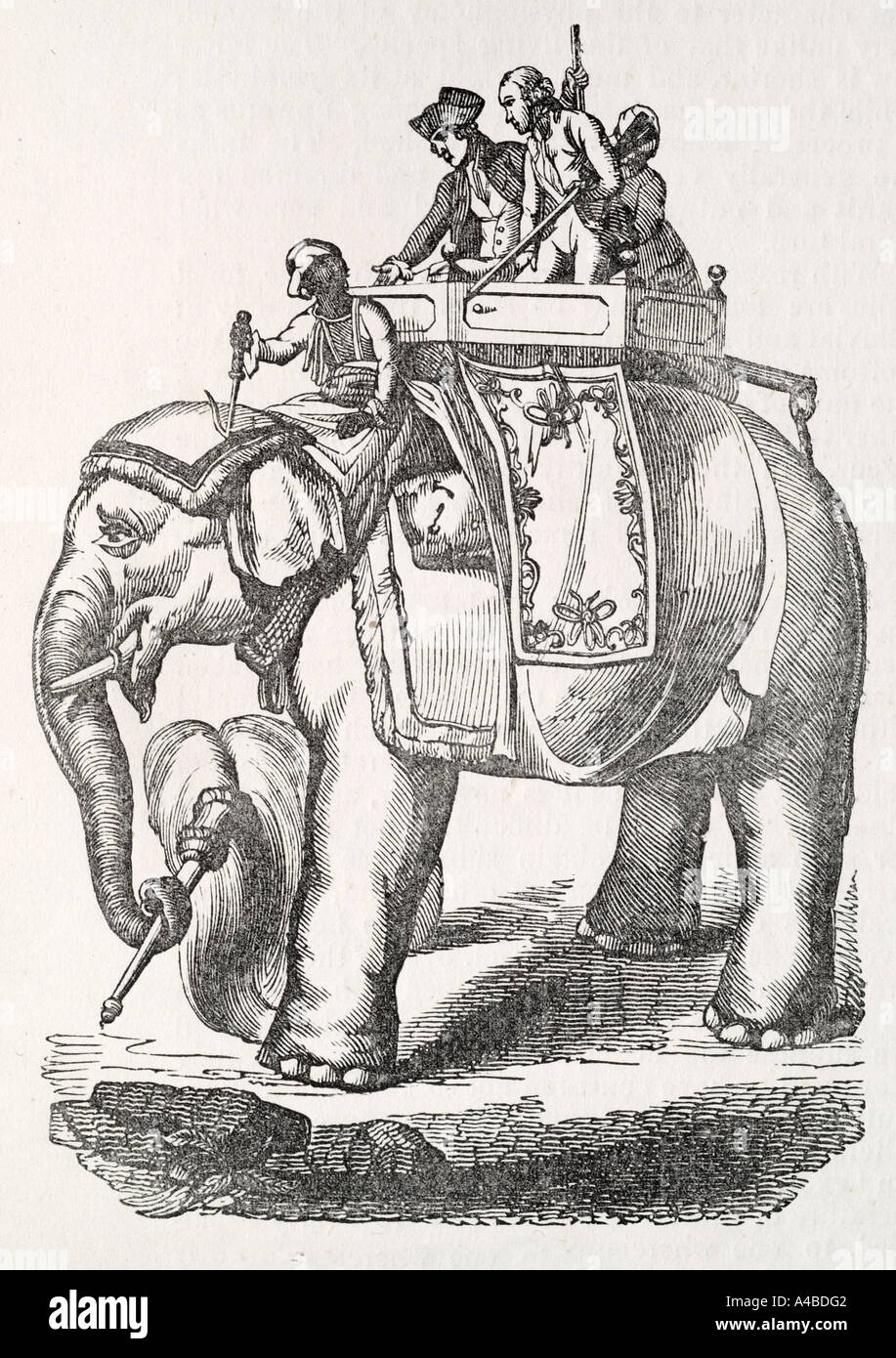 warren hastings elephant India Indian mammal breed tusk ivory Nature natural world jungle tropical tame work strong heavy howdah - Stock Image