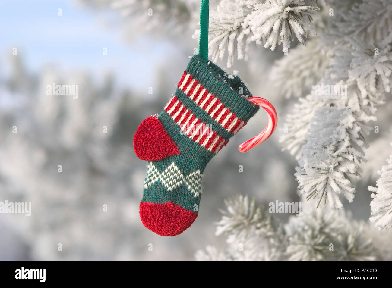 small christmas stocking hanging from frost covered tree - Small Christmas Stockings