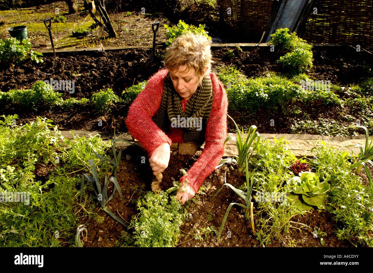 Carol S Garden: Carol Grow Stock Photos & Carol Grow Stock Images