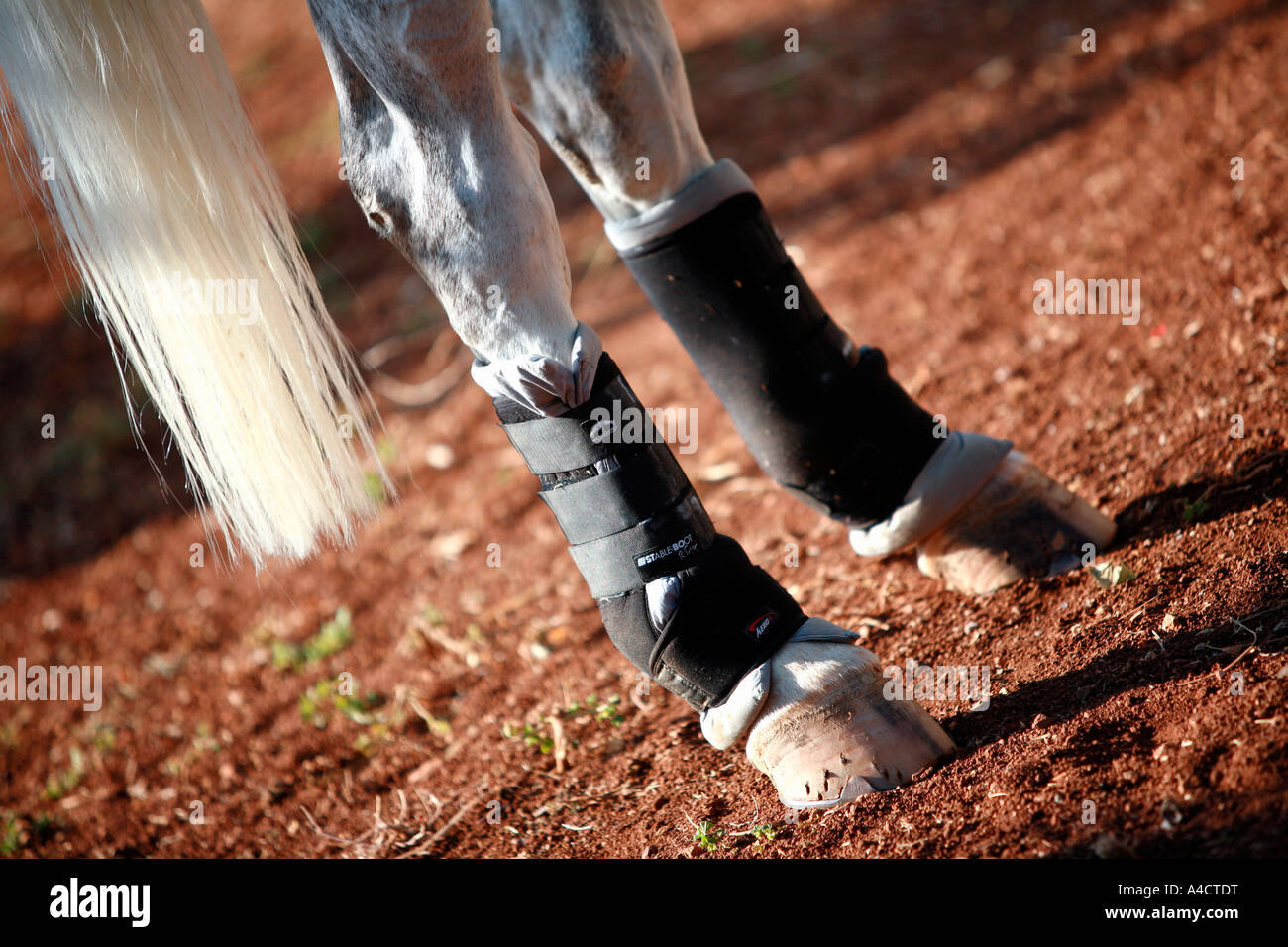 Closeup horse s hooves - Stock Image