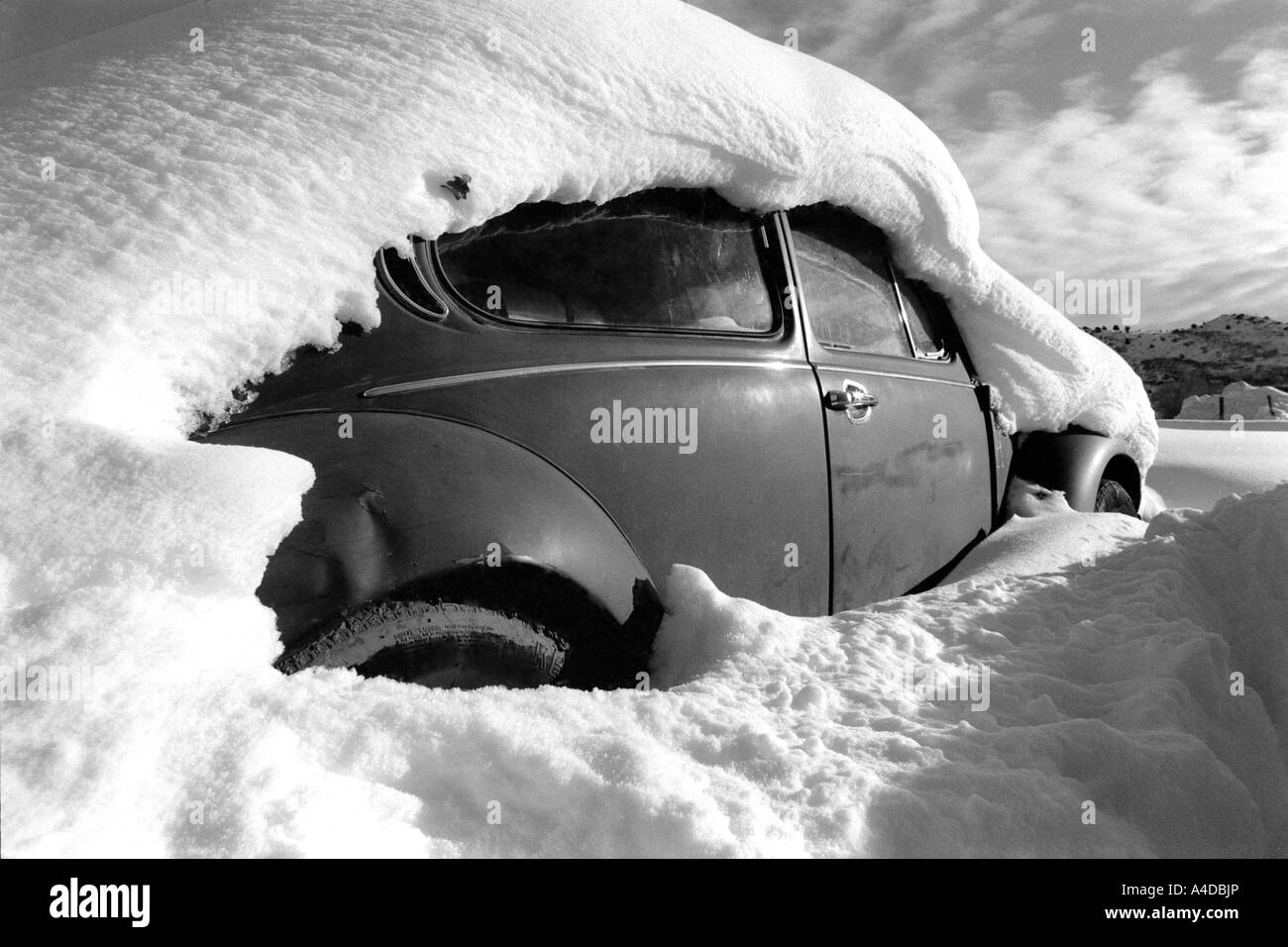 'Colorado beetle' Pun for VW Beetle taken in Colorado - Stock Image