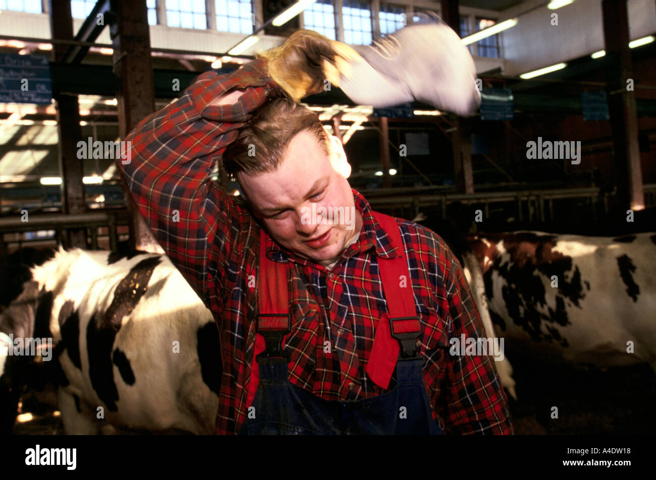 A swedish farm worker wipes away sweat during his shift at a farm near stockholm sweden - Stock Image