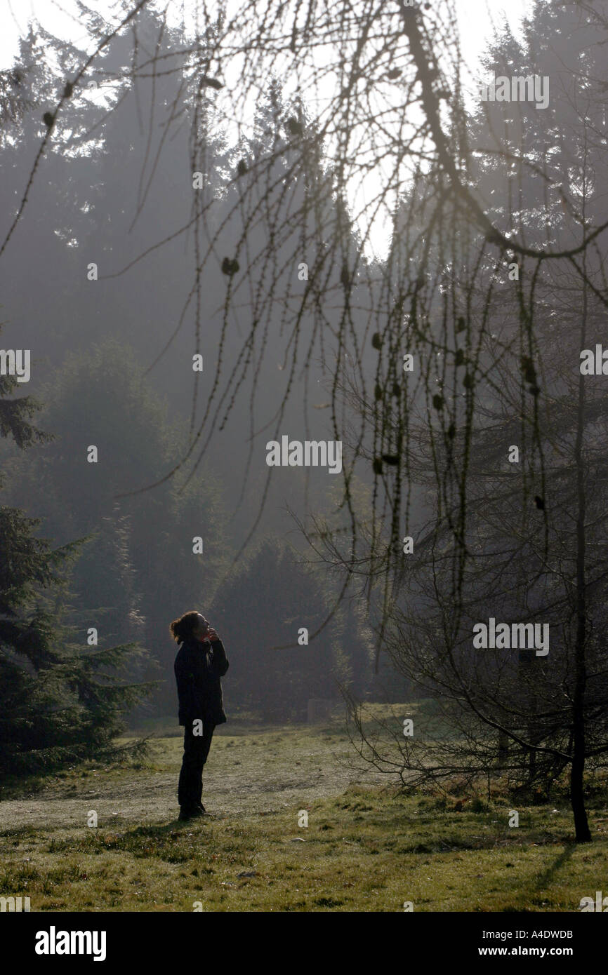A visitor admires a tree at the Bedgebury National Pinetum in Kent UK - Stock Image