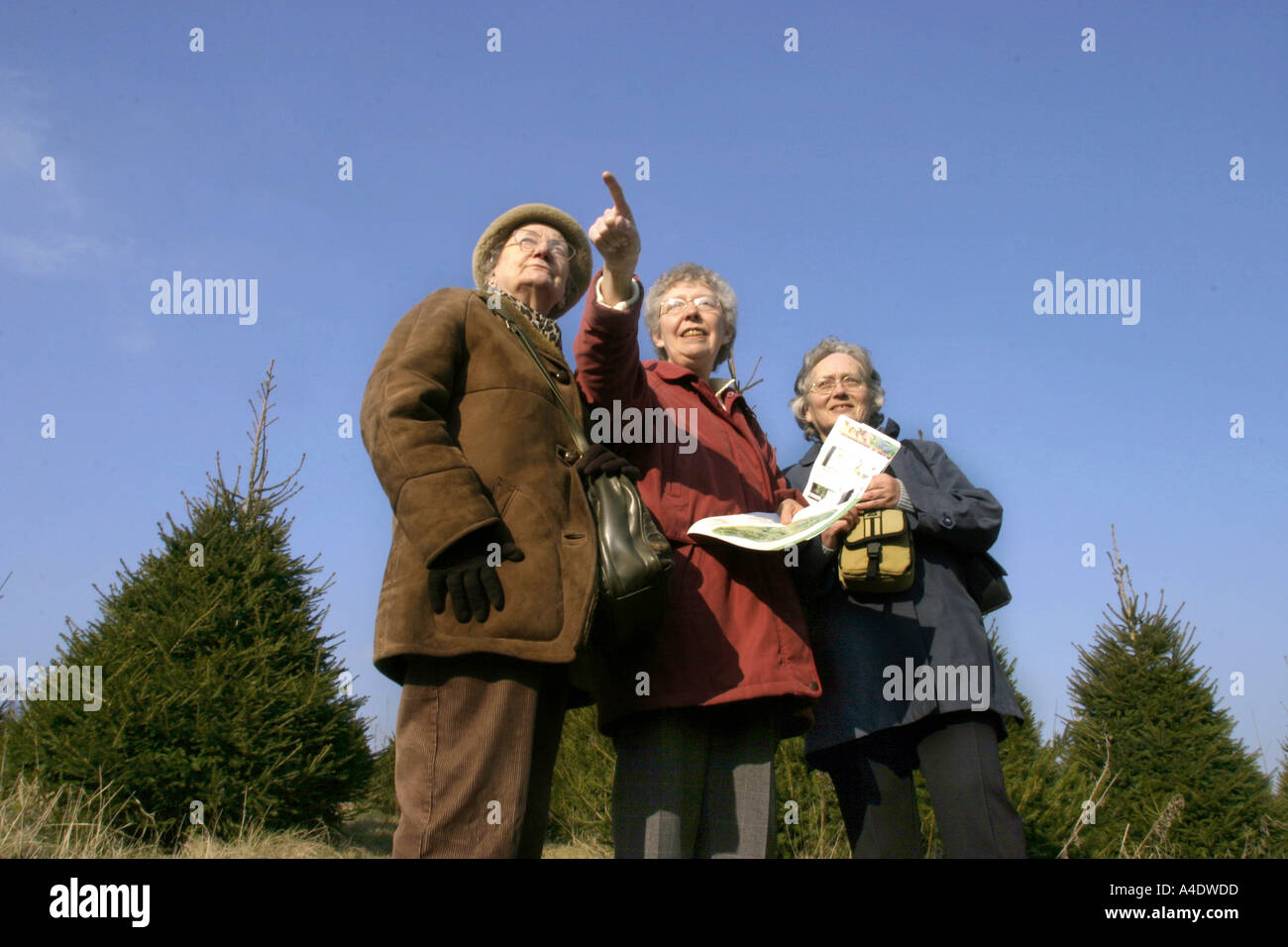 Three visitors read a map at the Bedgebury National Pinetum in Kent UK - Stock Image