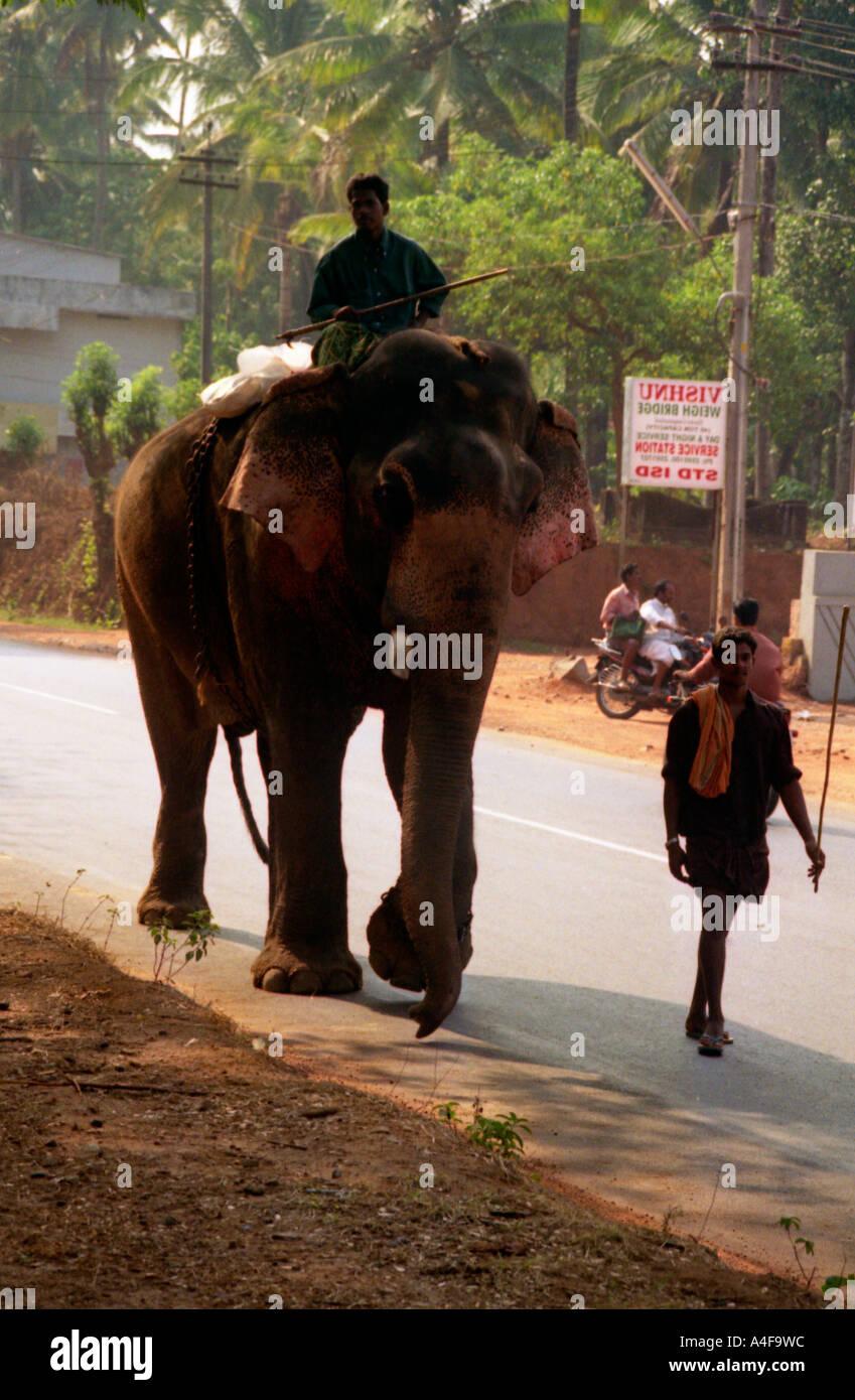 Elephant Road Kerala India Stock Photos & Elephant Road ...