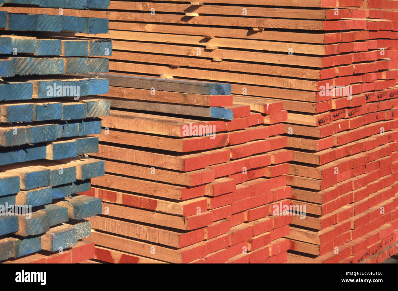 Stacks of sawn softwood construction timber in builders merchants yard with colour coded markings on ends - Stock Image