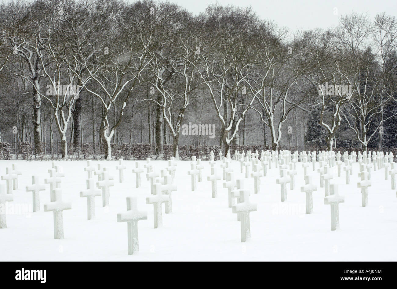 Magical Trees and Crosses, American Cemetery,Madingley, Cambridge Stock Photo